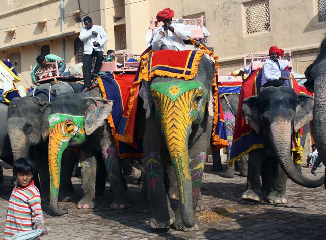 jaipur-amber-palace-elefanten, trolley-tourist.de