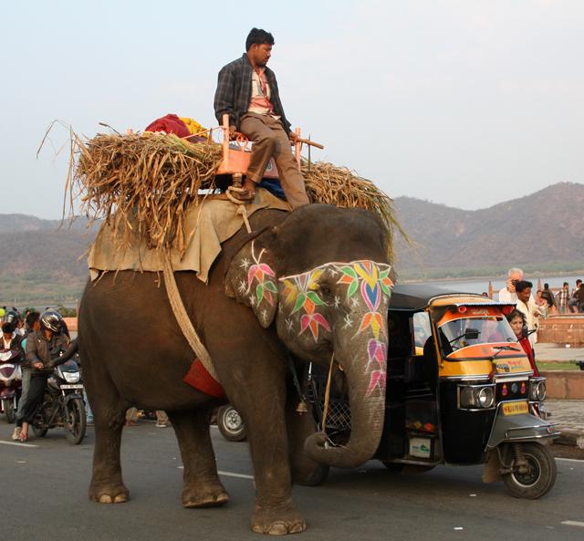 jaipur-elefant