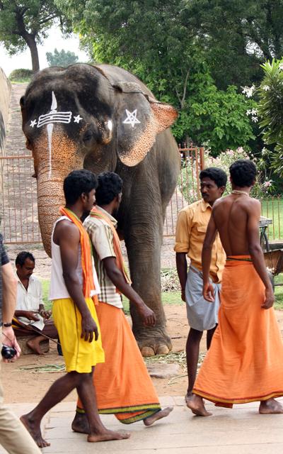 tanjore-tempel-elefant-trolley-tourist