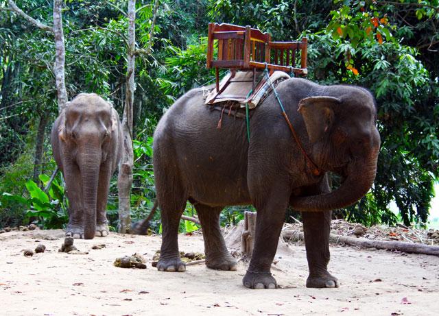 dorf-elefante-trolley-tourist