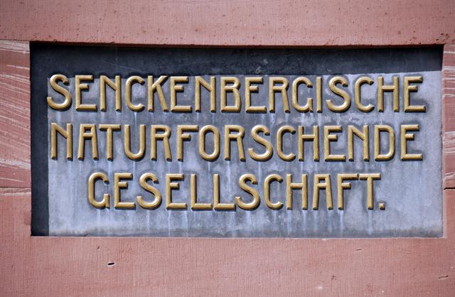 senckenberg