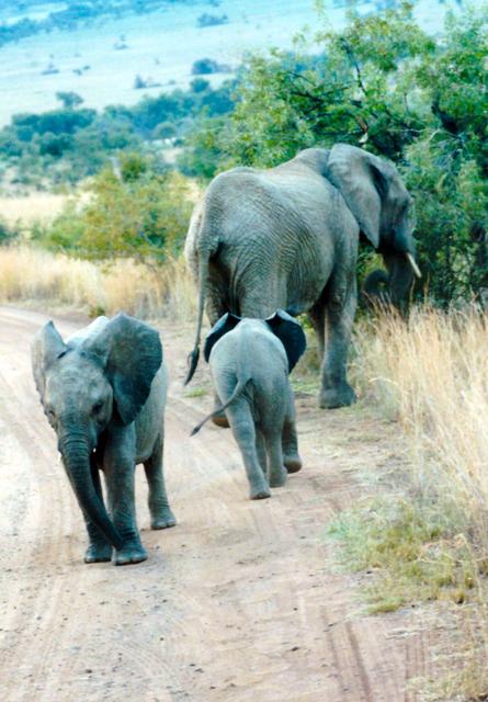 elefantenherde-trolley-tourist