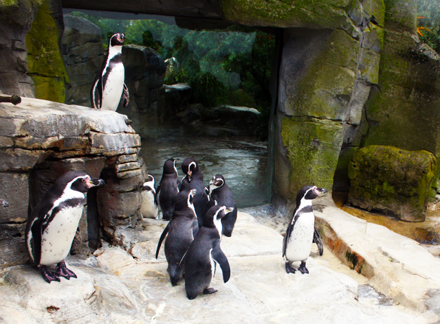 zoo-pinguine-bremerhaven-trolley-tourist
