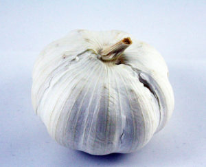knoblauch-knolle